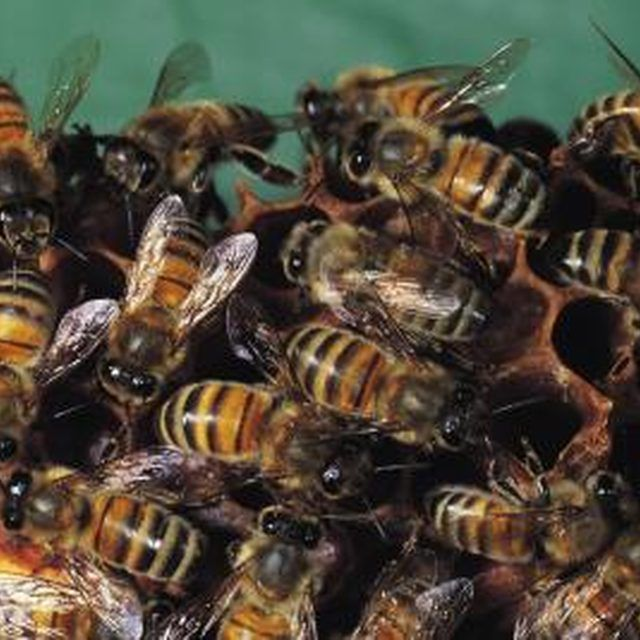 How to Kill Bees Coming Out of the Ground