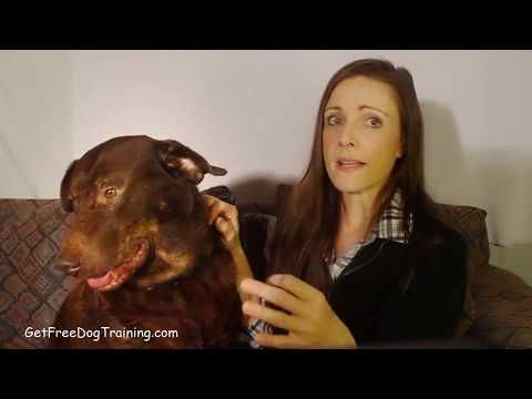 Doggy Dans The Online Dog Trainer Reviews & Testimonials - YouTube