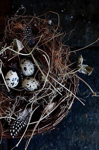 nest by -barbara carroll- #flickstackr Flickr: https://flic.kr/p/ForXTb