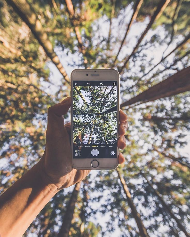 @jethoon Instagram #phone #trees #wood #forest #hand #nature #sky