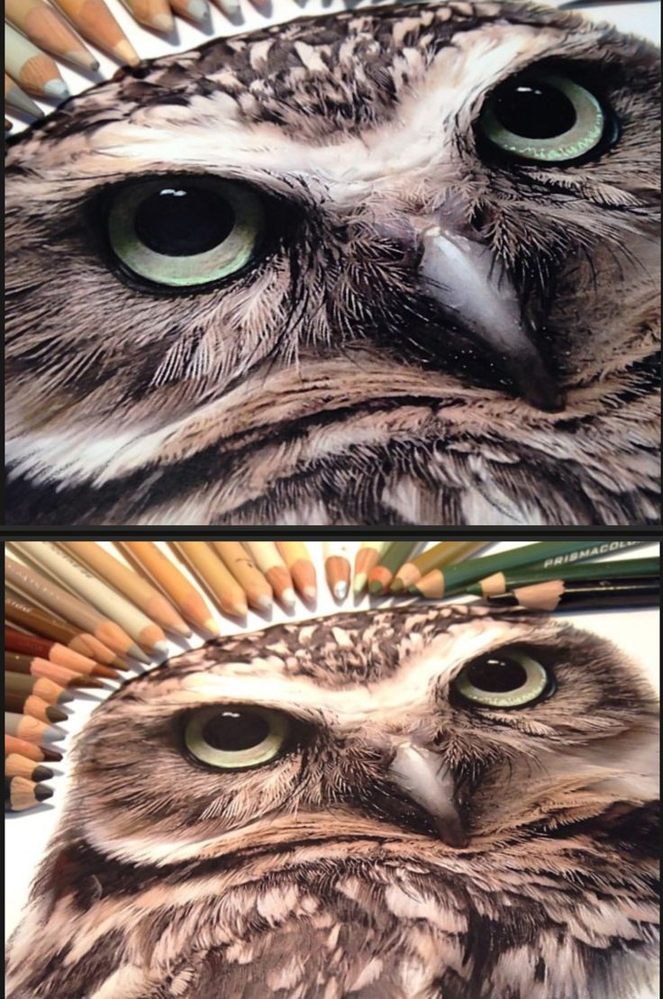 Amazing prismacolor pencils and pens/ markers art