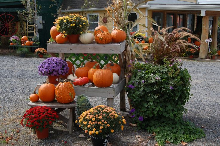 Fall Decorating Ideas That Don't Use a Halloween Theme