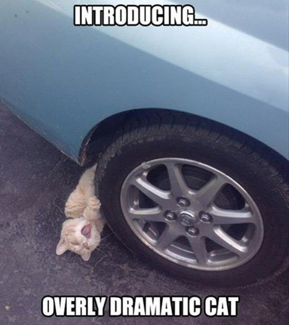 23 Funny Animal Pictures With Captions                                                                                                                                                                                 More