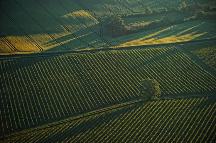 Vert - Vignoble d'Armagnac (Gers) © CRT Midi-Pyrénées / D. Viet #TourismeMidiPy #MidiPyrenees #France #Colors #Gers #Armagnac