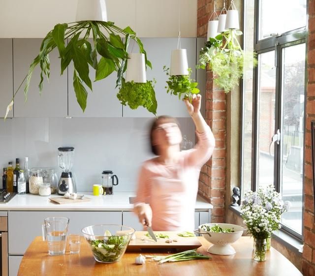 Bosske Sky Planter: Gardens Ideas, Sky Planters, Indoor Herbs, Hanging Plants, Indoor Gardens, Herbs Gardens, Small Spaces, Kitchens Herbs, Indoor Plants