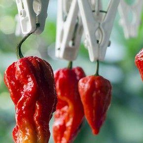 Все знают, что перец - жгучий на вкус, и знали, что перцы имеют свою шкалу жгучести?