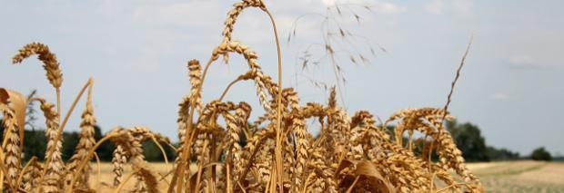 Achtung, kritisch verfolgen: Kommission will Gesetzgebung zum Bio-Anbau umgestalten
