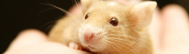 Wondermiddel tegen veroudering? Deze antioxidant verjongt onze bloedvaten - http://www.ninefornews.nl/wondermiddel-tegen-veroudering-deze-antioxidant-verjongt-onze-bloedvaten/