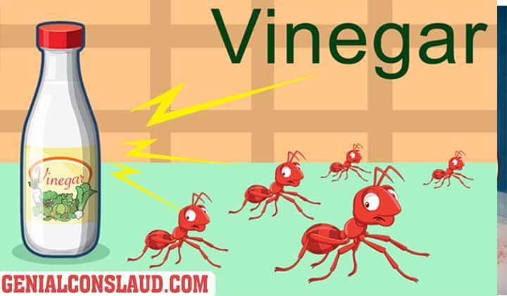 Como Acabar Con Las Hormigas Como Eliminar Las Hormigas La Guia Definitiva Los Mejores Trucos