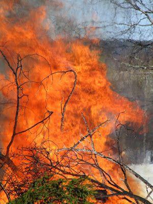 Työttömän valokuvaajan opas: Tulen peikko ärhentyy