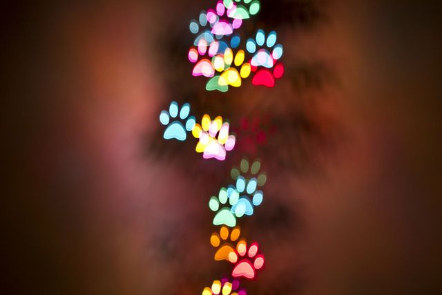 paw bokeh - DIY by The Spohrs Are Multiplying..., via Flickr  using manual camera create these effects...check out the link