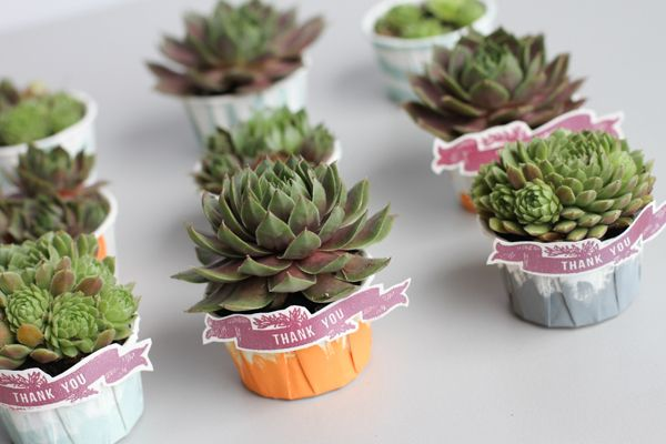 Painted & Planted: Succulent Favors - Project Wedding - EASY DIY using paper baking cups as a pot for the succulent wedding favour. This is by far the cheapest and most eco friendly option I have seen for Succulent wedding favours. And you can easily customize the colours to fit your wedding theme!