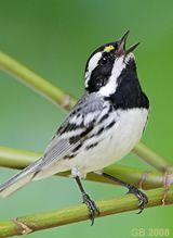 Birding in British Columbia