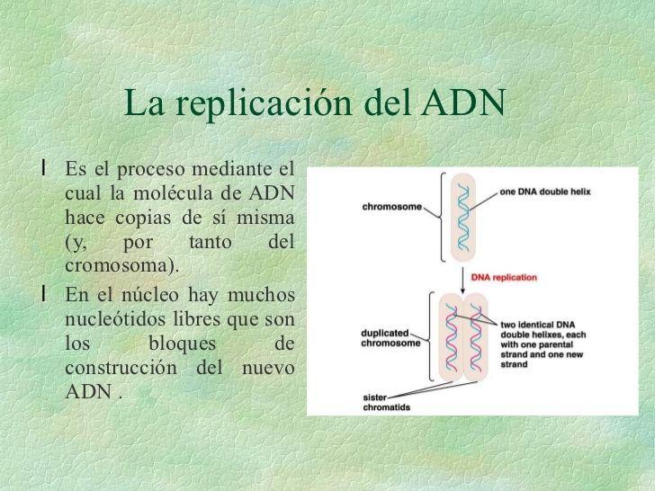 http://es.slideshare.net/albertososa/estructura-y-funcion-del-adn?next_slideshow=1