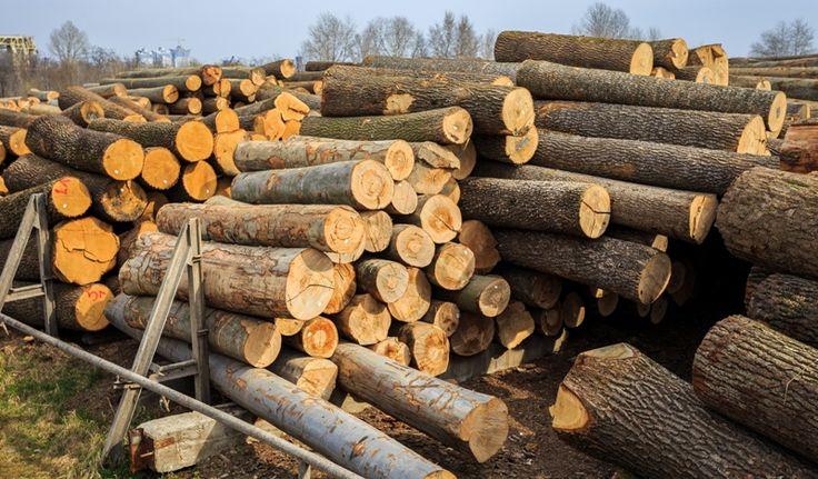 Лесосырье   Каждый уголок нашей планеты является особенным и уникальным. Полученные за годы знания о деревьях, лесах, почвах, а также климатических условиях передаются из поколения в поколение.   Исходя из этих знаний, мы закупаем лес кругляк только из лучших регинов, что позволяет полностью соответстовать Вашим потребностям.  А также, будем рады, если Вы предложите нам качественное сырье.