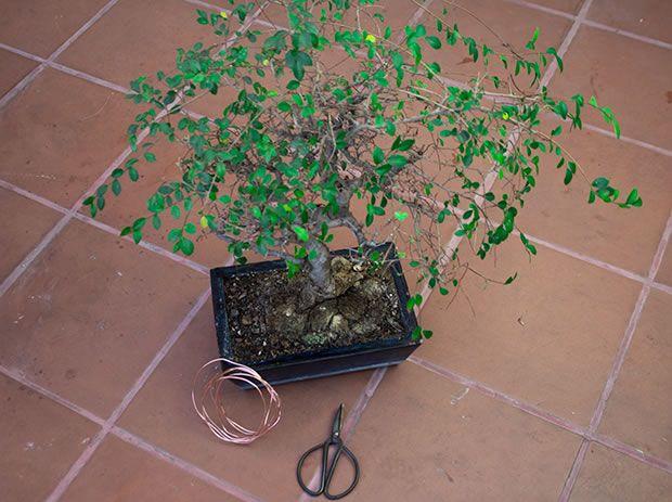 cómo hacer tu propio bonsái | bonsai