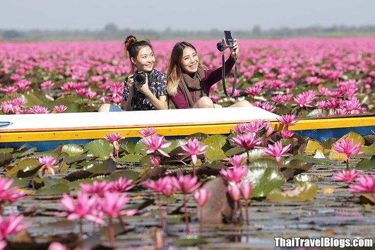 UDON THANI | Red Lotus Lake or Talay Bua Daeng (ทะเลบัวแดง)