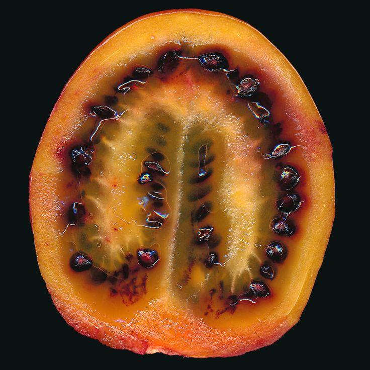 Tamarillo Fruit Scanography | Sash Segal