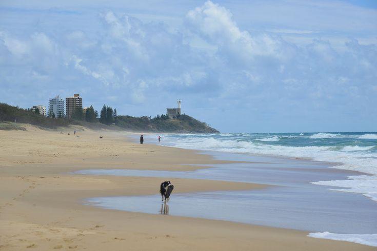 Buddina off leash dog beach