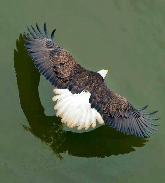 Eagle over water. Amazing shot.
