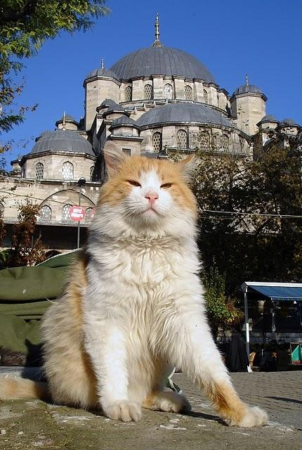 Yeni Cami Mosque....Don't you just love me!