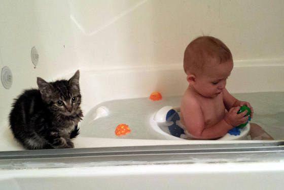 Este gatito que se toma MUY en serio su labor de niñera. | 31 Imágenes tan adorables que te harán enojar de lo lindo