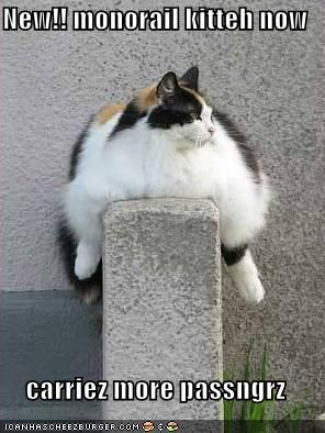 who's fat? >__> #catsCute Animal, Fat Kitty, Big Cats, Kitty Cat, Funny Cat, Pets, Fatcats, Fat Cats, Calico Cat