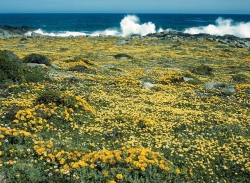 Postberg, West Coast National Park, South Africa