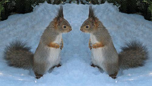 Mirror, mirror ;)