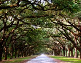 Things to do in Charleston, SC: Travel Guide from 10Best... Been here its really nice if you like good old history
