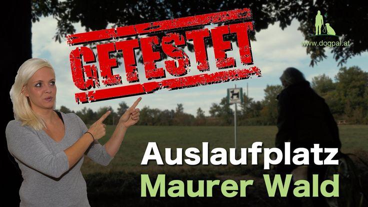 Hundezonen, Auslaufflächen & Ausflugsziele Wien/NÖ Test TEIL 4  (Maurer ...