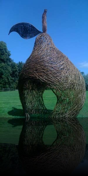 Pear - Waterperry Gardens, Oxford - Tom Hare