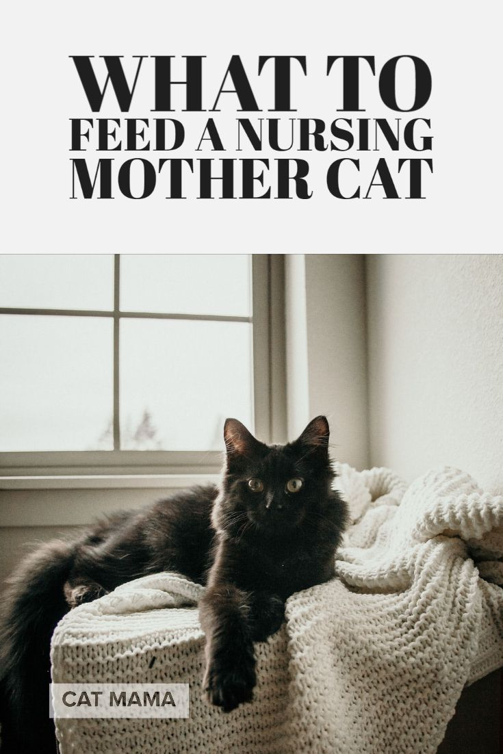 What To Feed A Nursing Mother Cat The Best Cat Food For Nursing Cats Cats Nurse Cat Mother Cat