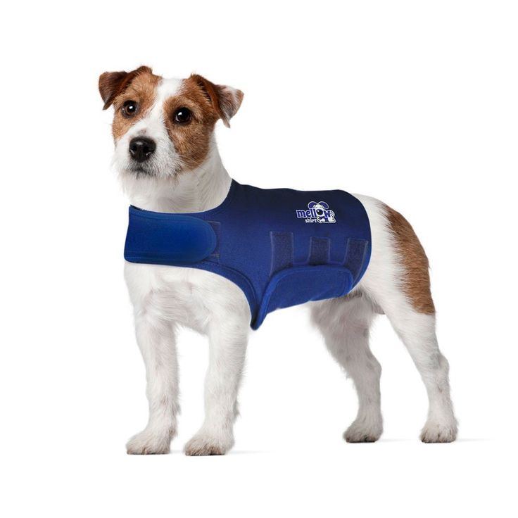 179 Best Images About Puppy Love On Pinterest Pet