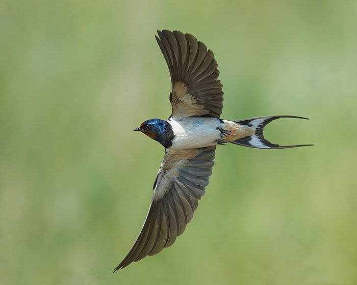 5 Major Characteristics of Birds