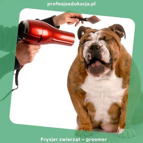 Pragniesz zostać ... fryzjerem psów? :) Nie mogłeś trafić lepiej, już teraz możesz zapisać się na zajęcia w naszej #Szkole #Policealnej i zostać profesjonalnym #DogGroomerem. www.profesjaedukacja.pl