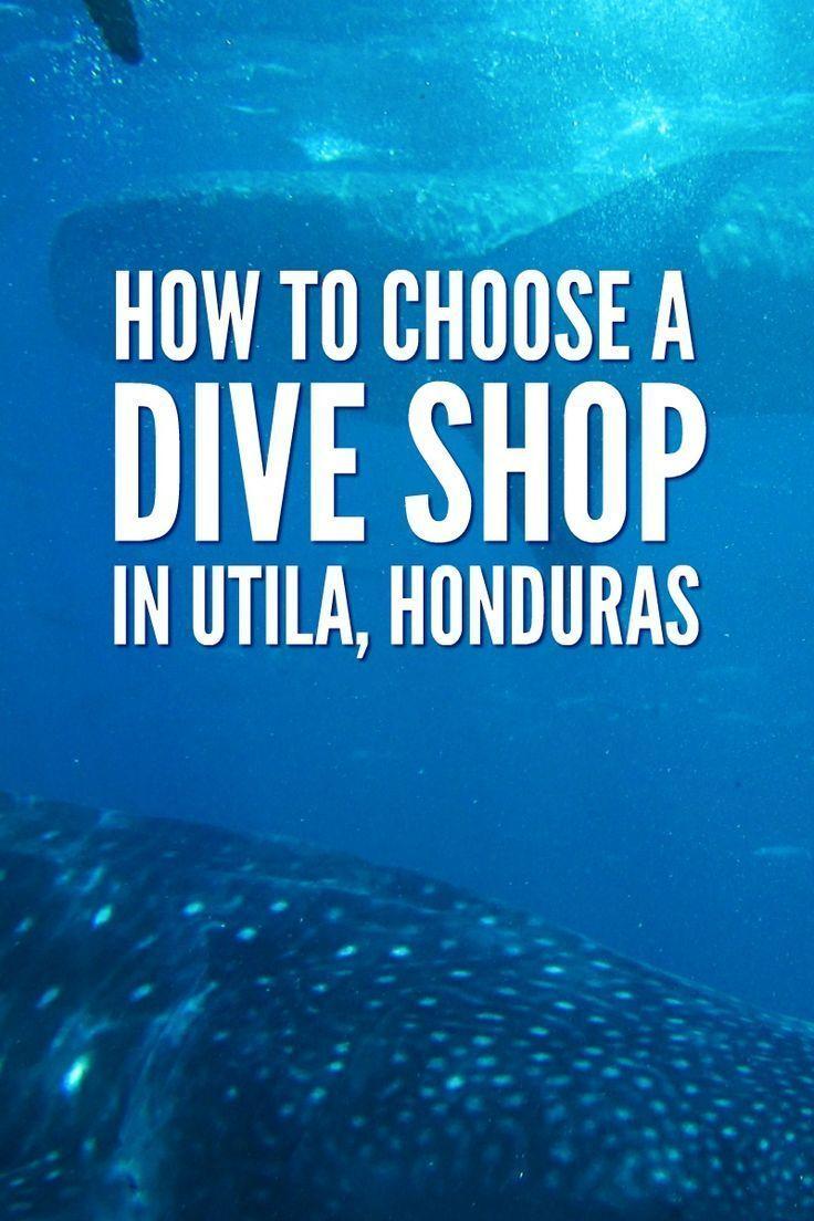 1000 ideas about dive shop on pinterest scuba diving for The dive shop