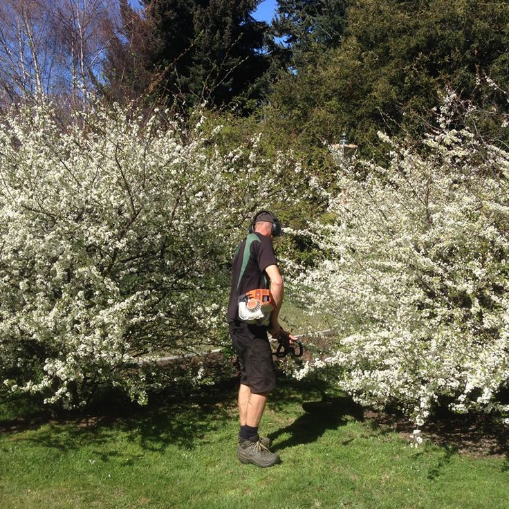 Queenstown Property Services - Lawn Mowing, Hedges, Trees, Gutters, Rubbish Removal, Spraying, Waterblasting - Peak To Peak Property Services