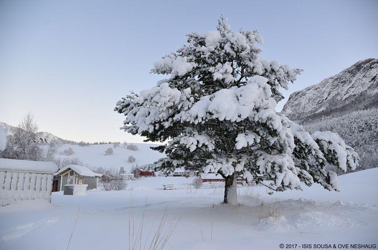#Winter #Norway #Snow #SousaNeshaug (C) Sousa & Neshaug Photography - http://sousaneshaug.com