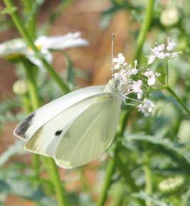 Nature's Wisdom: What Your Garden Knows