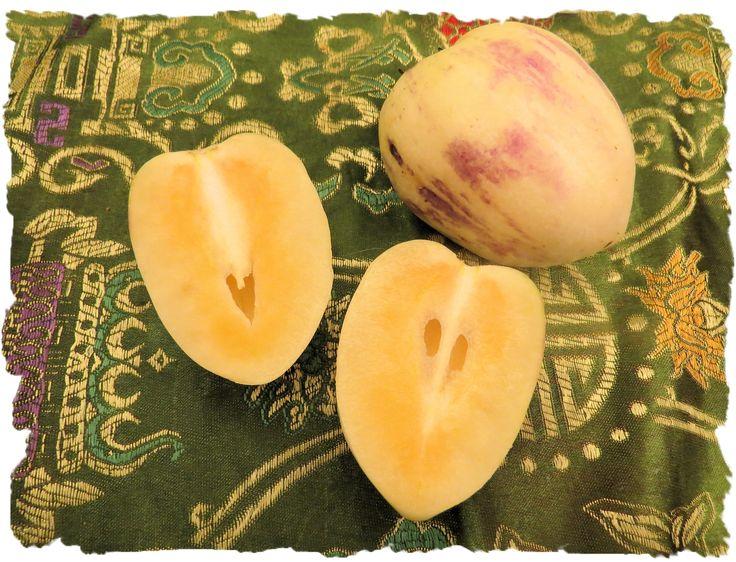 Life in China: A Picture A Day - Jan 22, 2016 - pepino dulse or pepino melon, Songshan Lake, China  - My Own Chinese Brocade Blog Songshan Lake, Dongguan, Guangdong, China