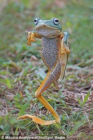 Кунг-фу бойові жаби в дії
