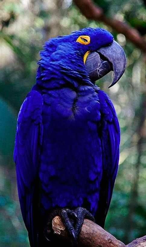 Purple parrot; Earth song