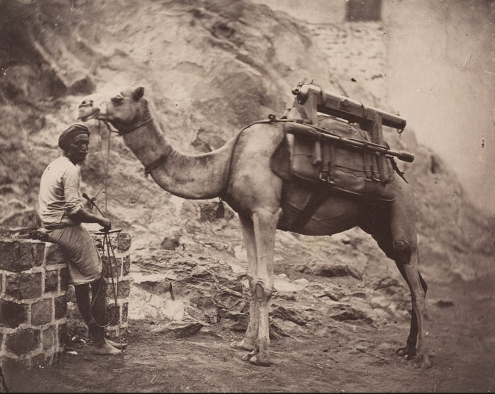 A camel and handler in Aden, ca. 1880 / Bonhams