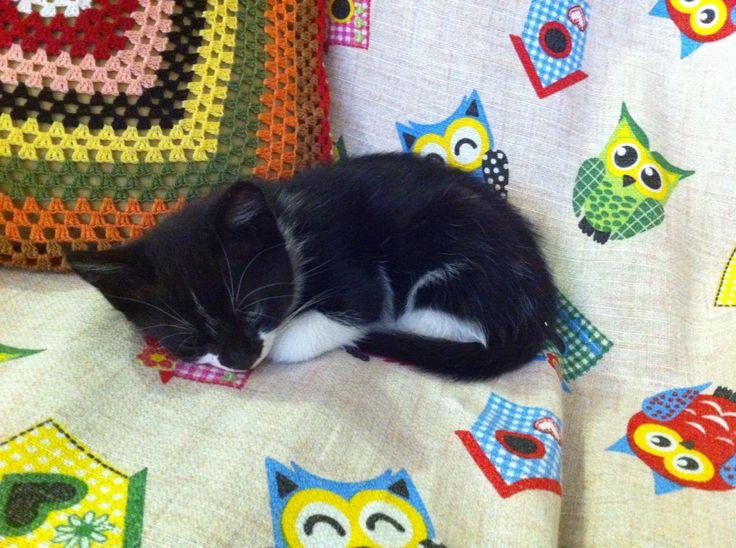 Adorabile bimba gatta