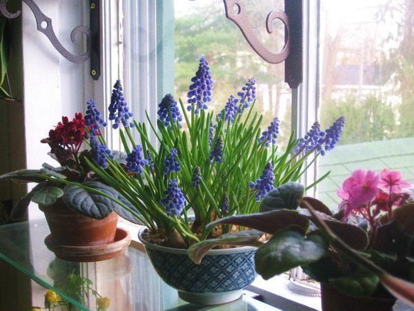 оконные полки с домашними растениями и цветами