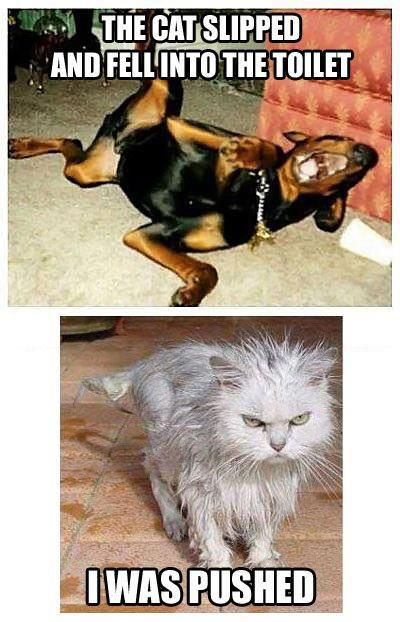 Funny moment:  This dog is laughing about a cat whom he may or may not have pushed in the toilet