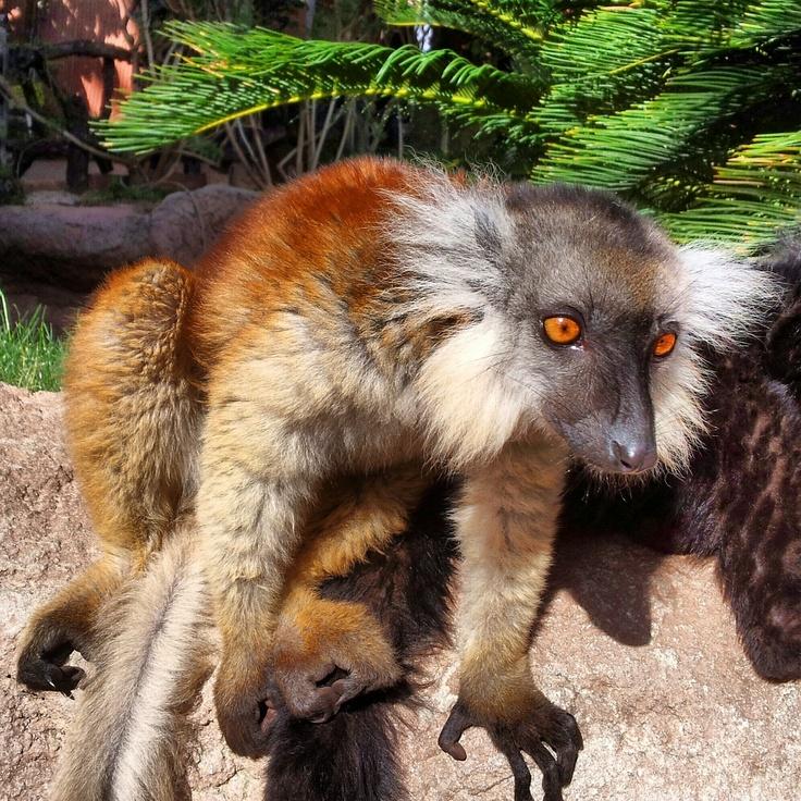 ve a disfrutar de los animales de biopark fuengirola