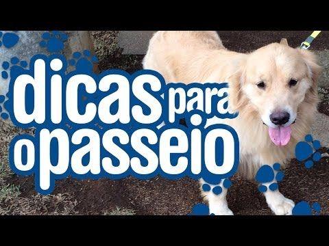 Adestramento de cães - aprendendo a passear - YouTube