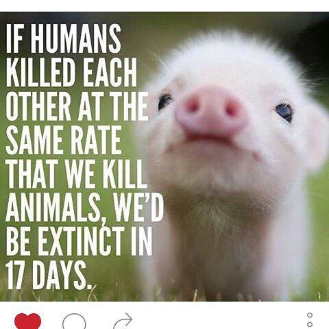 Animal Rights, Human Rights